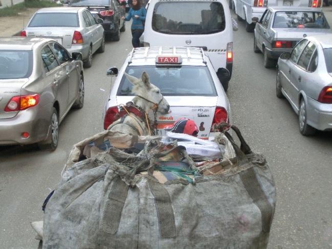 ロバが車道にいるからこんな渋滞なるんやて